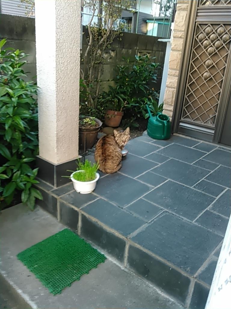 【猫】振り返って_f0141609_09371803.jpg