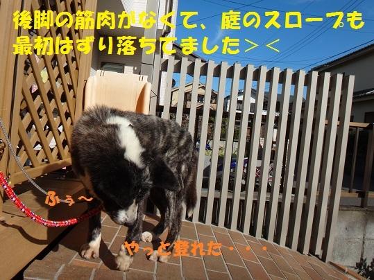 f0121712_13301392.jpg