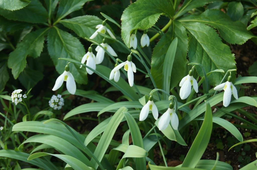 真冬の白い花_e0181373_2036292.jpg