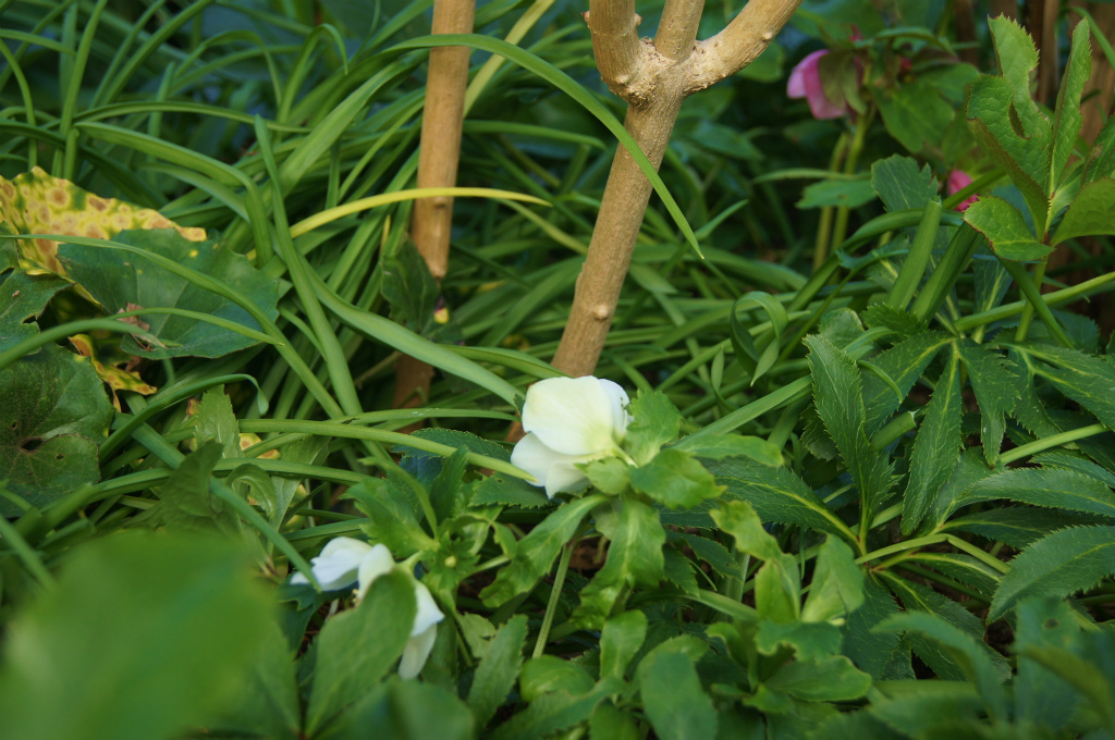 真冬の白い花_e0181373_20363820.jpg