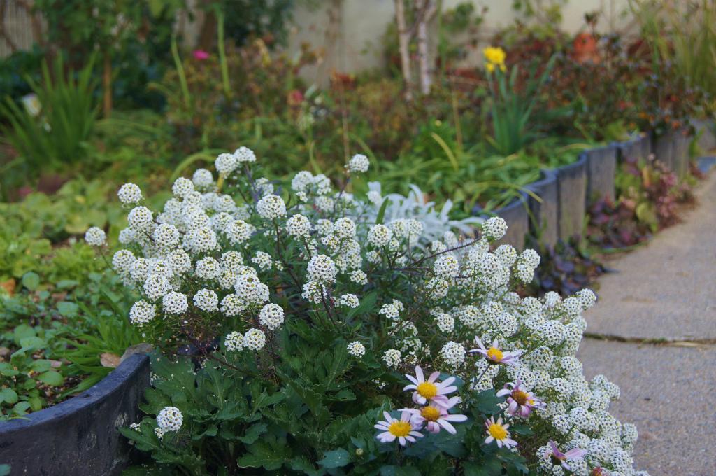 真冬の白い花_e0181373_2037095.jpg