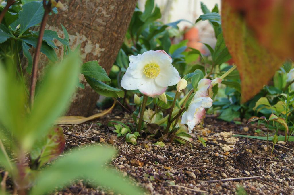 真冬の白い花_e0181373_20373381.jpg