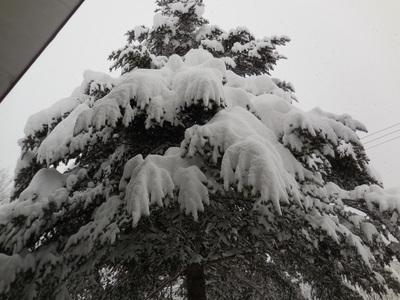 1月13日金曜  雪  -2度_f0210811_932456.jpg