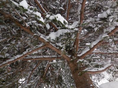1月13日金曜  雪  -2度_f0210811_934680.jpg