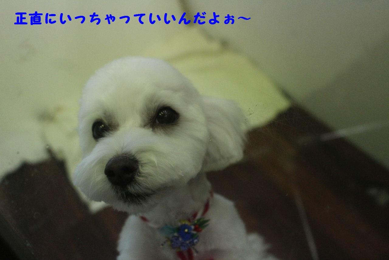 b0130018_7204076.jpg