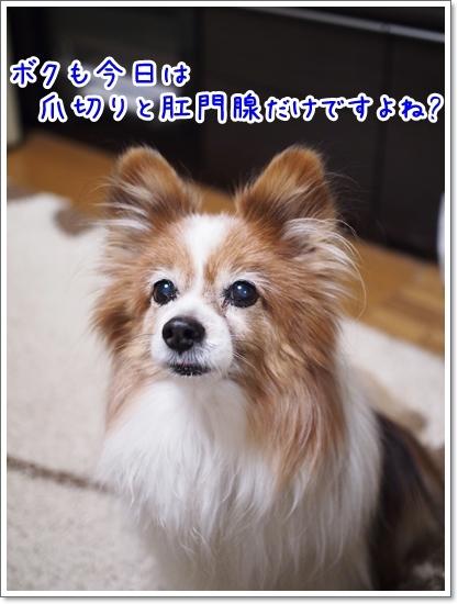 d0013149_00230988.jpg