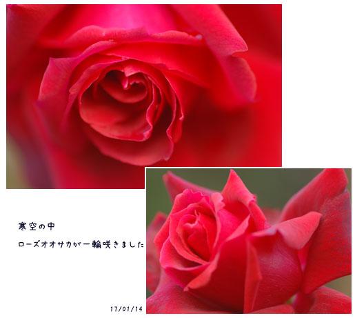 c0051105_17424990.jpg