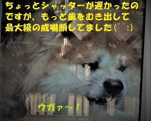 f0121712_15273229.jpg
