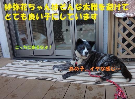f0121712_15322912.jpg