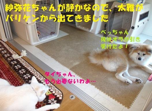 f0121712_18153832.jpg