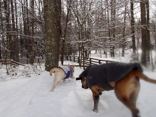 雪を少し楽しみました_e0192217_13002443.jpg