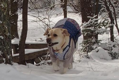 雪を少し楽しみました_e0192217_13002933.jpg