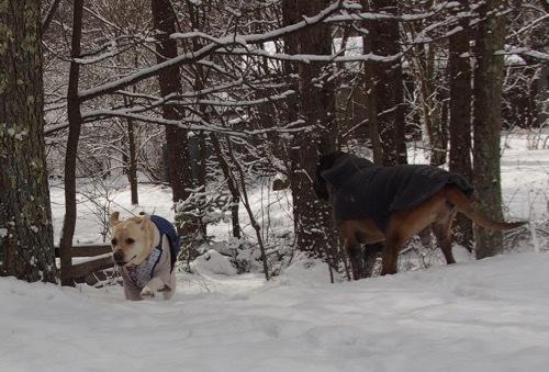 雪を少し楽しみました_e0192217_13003176.jpg