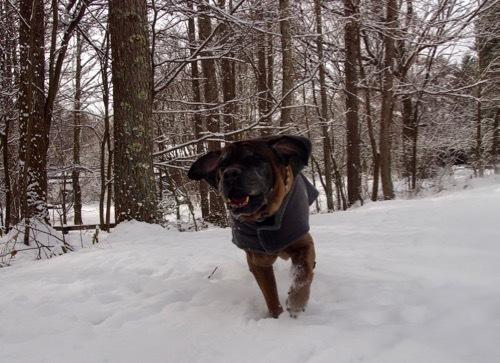雪を少し楽しみました_e0192217_13003467.jpg