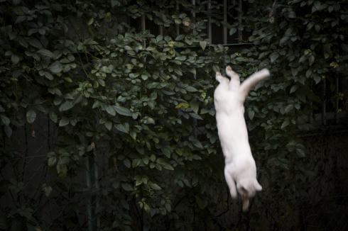 [猫的]ヒト猫のソト猫_e0090124_23485188.jpg