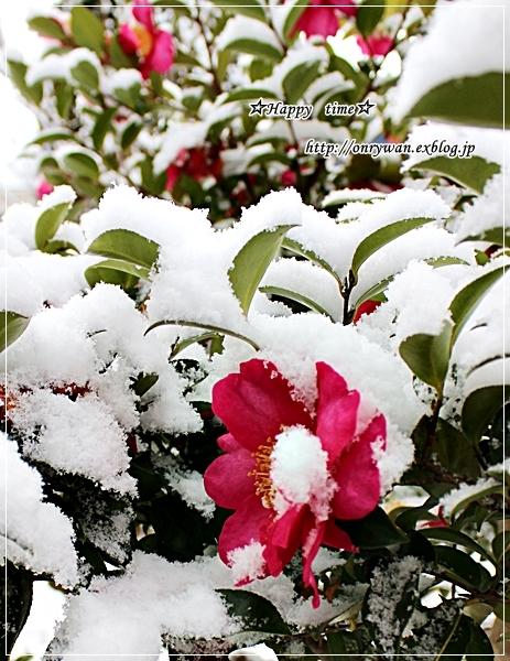 天ぷら弁当と初雪~♪_f0348032_18155311.jpg
