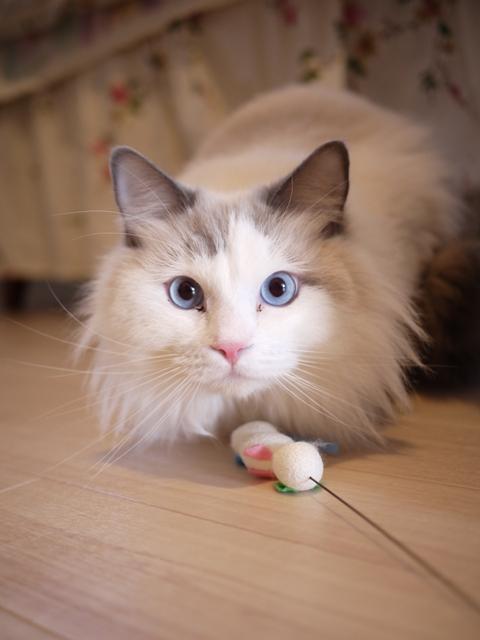 猫のお留守番 小石丸くん編。_a0143140_18474722.jpg