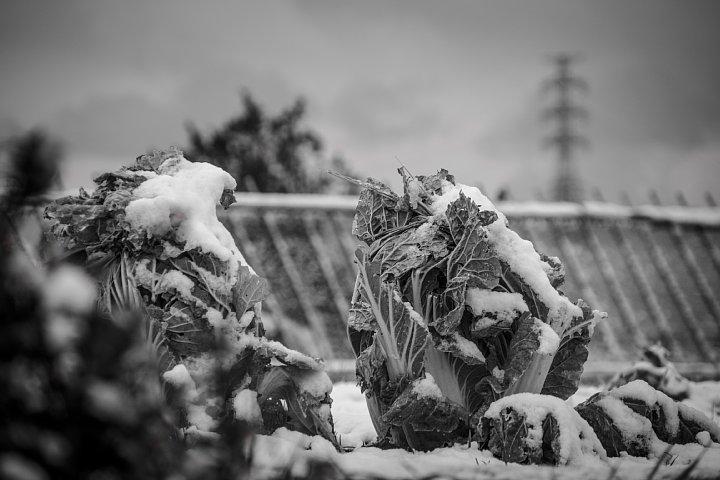 凍てつく田園 (写真部門)_d0353489_17321941.jpg