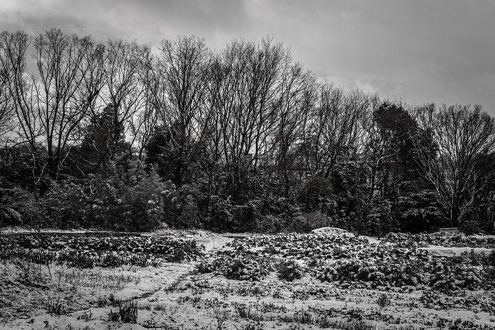 凍てつく田園 (写真部門)_d0353489_17334355.jpg