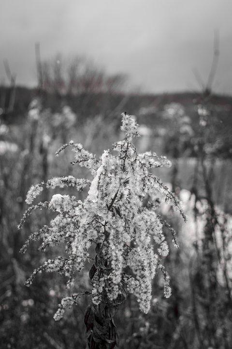 凍てつく田園 (写真部門)_d0353489_1735283.jpg