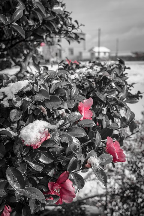 凍てつく田園 (写真部門)_d0353489_17355350.jpg