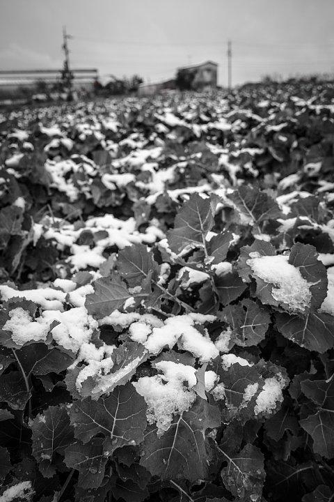 凍てつく田園 (写真部門)_d0353489_17371162.jpg