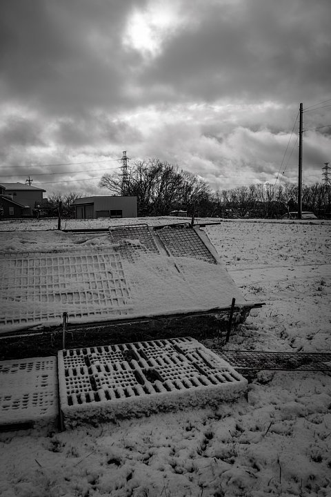 凍てつく田園 (写真部門)_d0353489_17395682.jpg