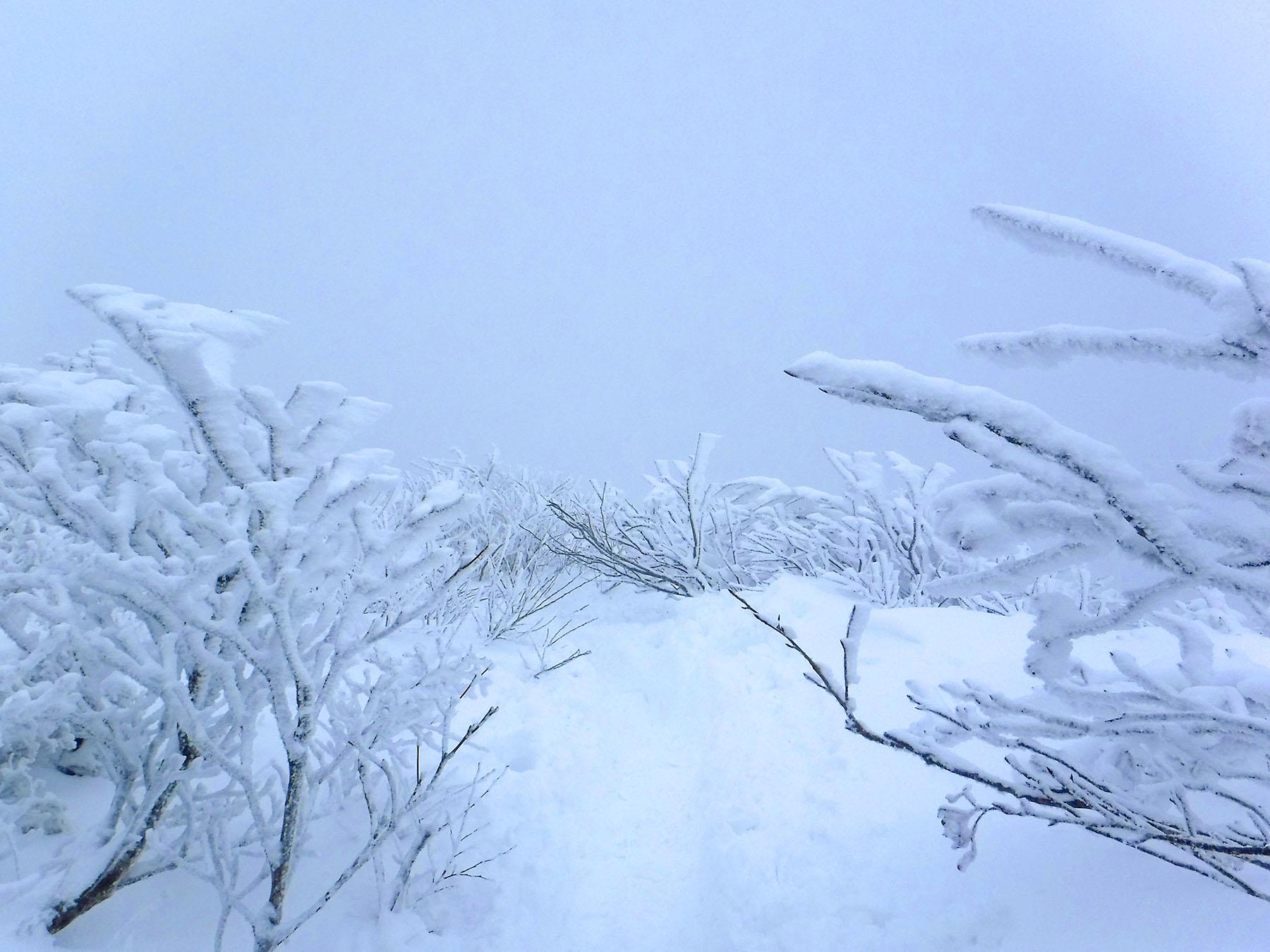 寒いね_a0102098_115116.jpg