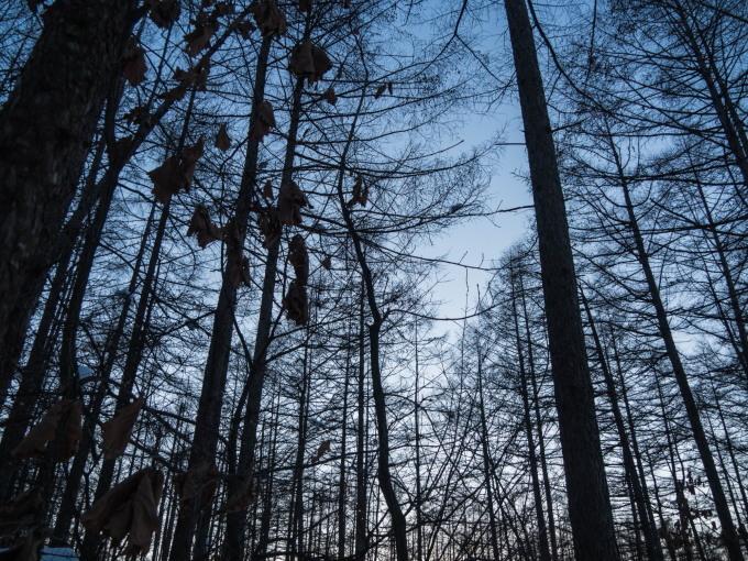 極寒の夕暮れ時・・3日連続でマイナス20℃越え!_f0276498_23491763.jpg