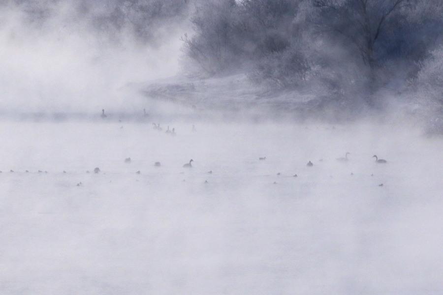 厳寒の朝 長都沼付近_c0360399_17501201.jpg