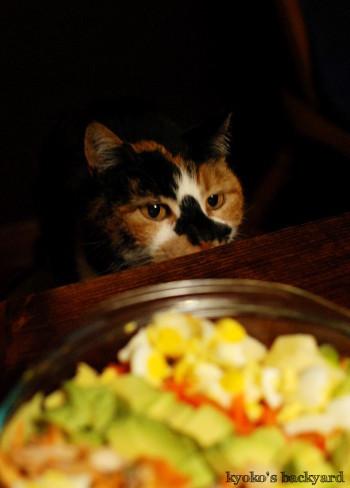 胃腸にやさしいスープ&サラダの日_b0253205_04465885.jpg