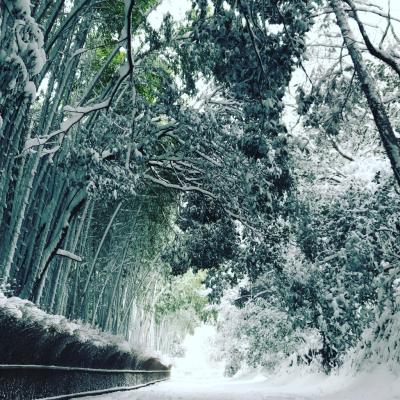 雪国_a0167912_12311912.jpg