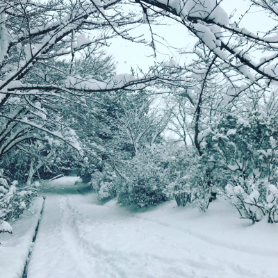 雪国_a0167912_12311971.jpg