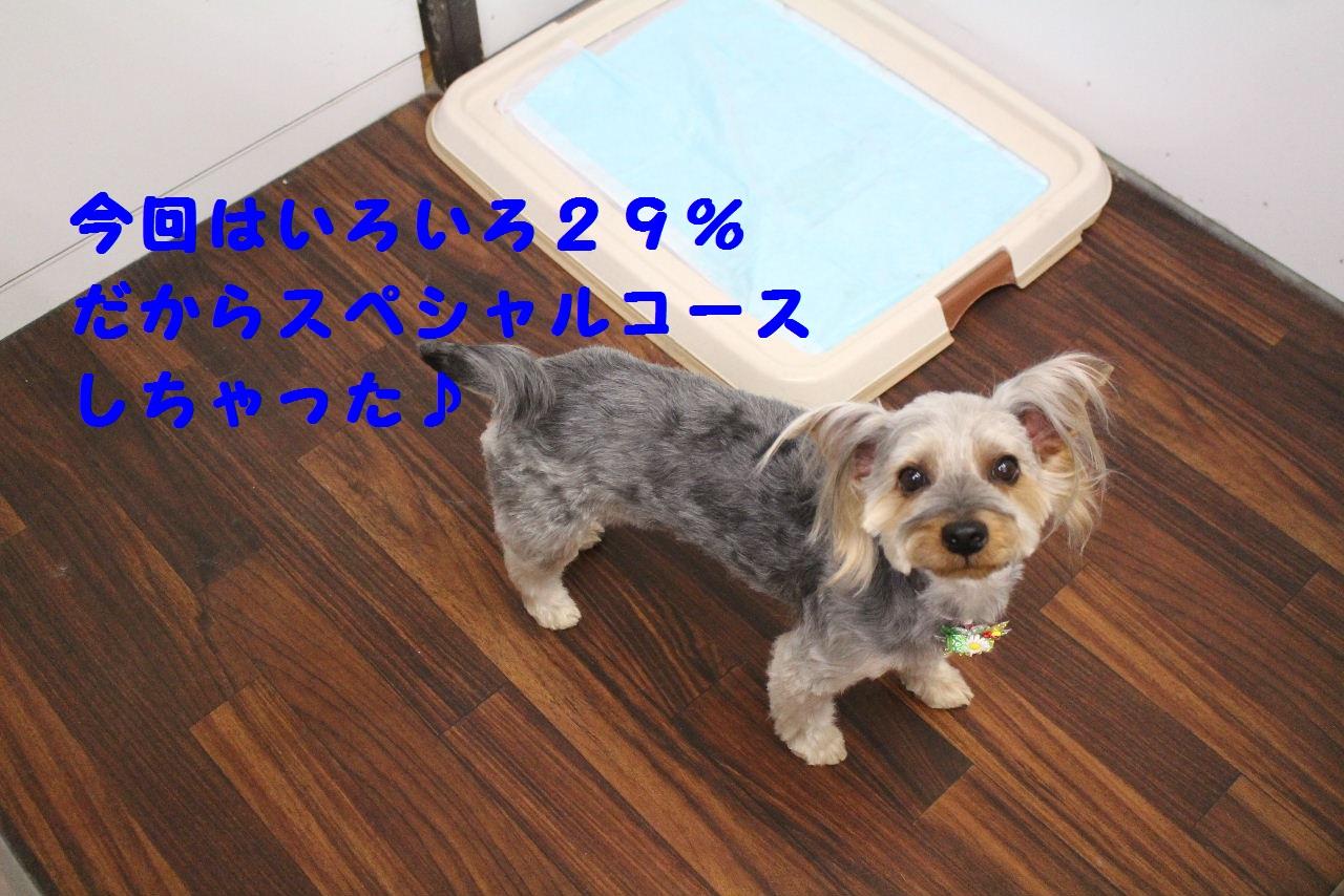 b0130018_726132.jpg