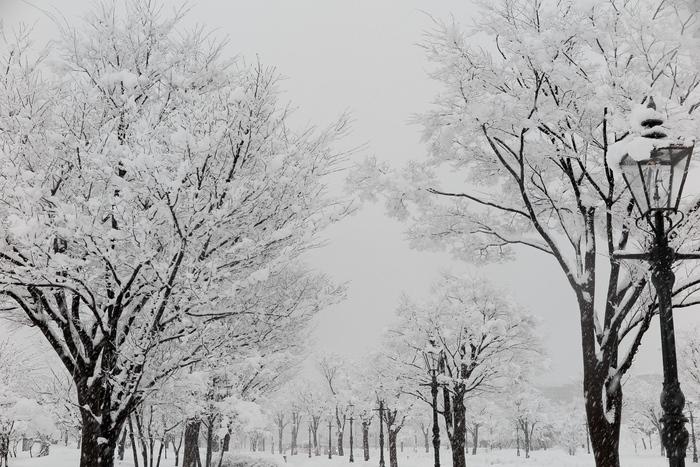 雪が降る_e0169421_12295627.jpg