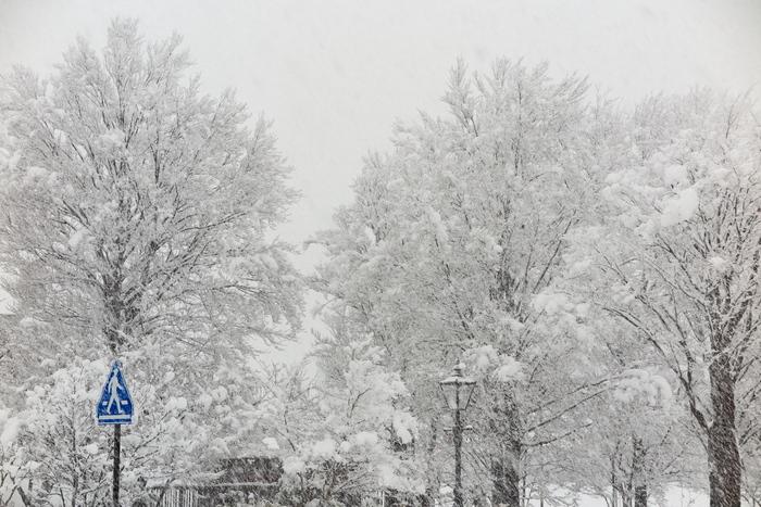 雪が降る_e0169421_12295980.jpg