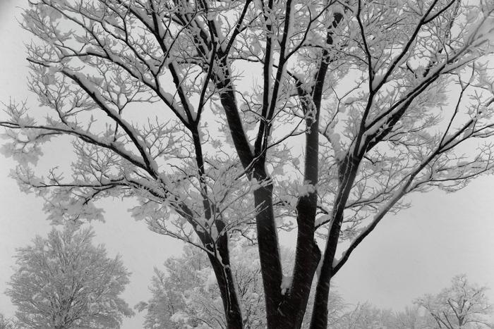 雪が降る_e0169421_1230152.jpg