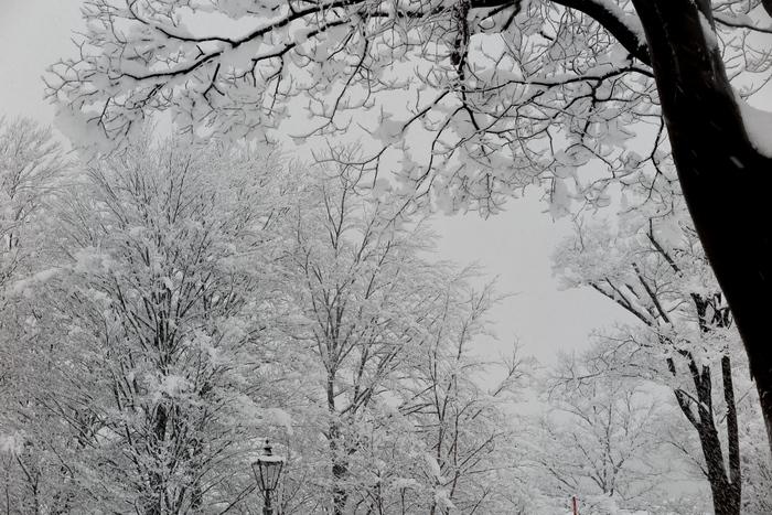 雪が降る_e0169421_1230277.jpg