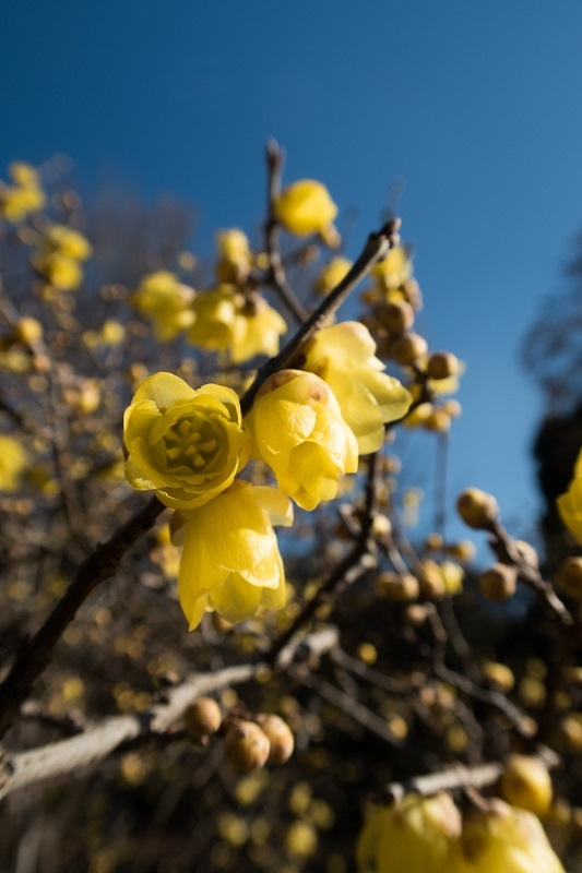 春を呼ぶ_e0364223_17553015.jpg