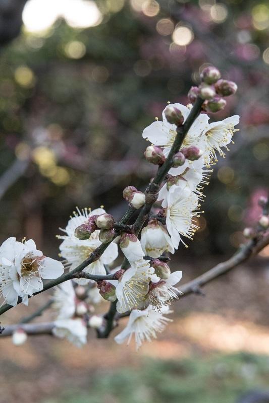 春を呼ぶ_e0364223_17564404.jpg