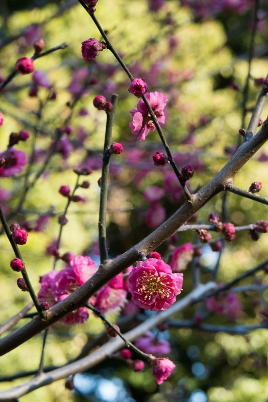 春を呼ぶ_e0364223_17571307.jpg