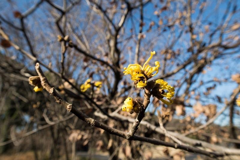 春を呼ぶ_e0364223_17580737.jpg