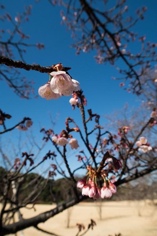 春を呼ぶ_e0364223_17583063.jpg