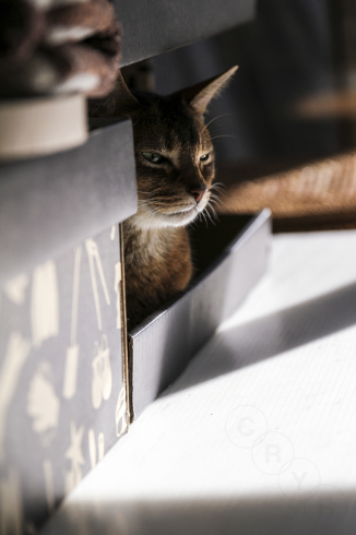 [猫的]90度回転(動物・ペット部門)_e0090124_21522711.jpg