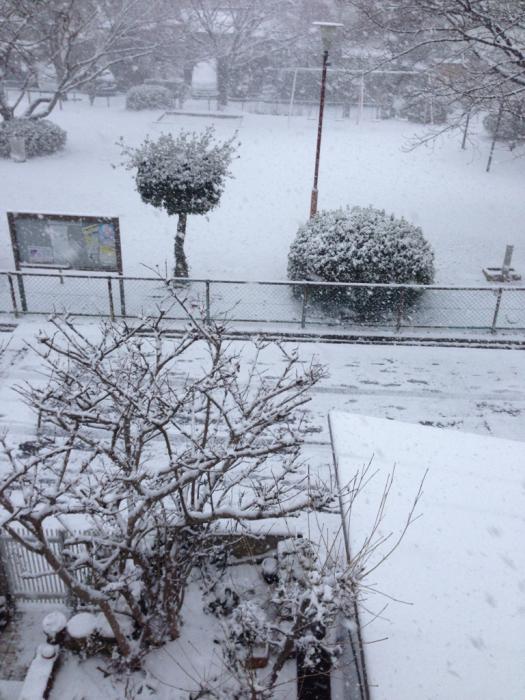 雪の中で春の準備_f0155431_20585152.jpg