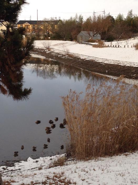 雪の中で春の準備_f0155431_20585573.jpg