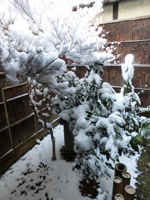 雪の日曜日_e0230141_09501021.jpg