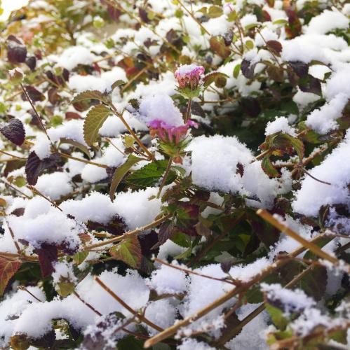 小さいけれどお気に入りの無印良品グッズ & 雪の日の散策。_e0348257_21113288.jpg