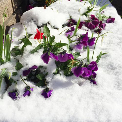 小さいけれどお気に入りの無印良品グッズ & 雪の日の散策。_e0348257_21114541.jpg