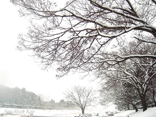 京都も雪  2017年1月15日_a0164068_15393029.jpg